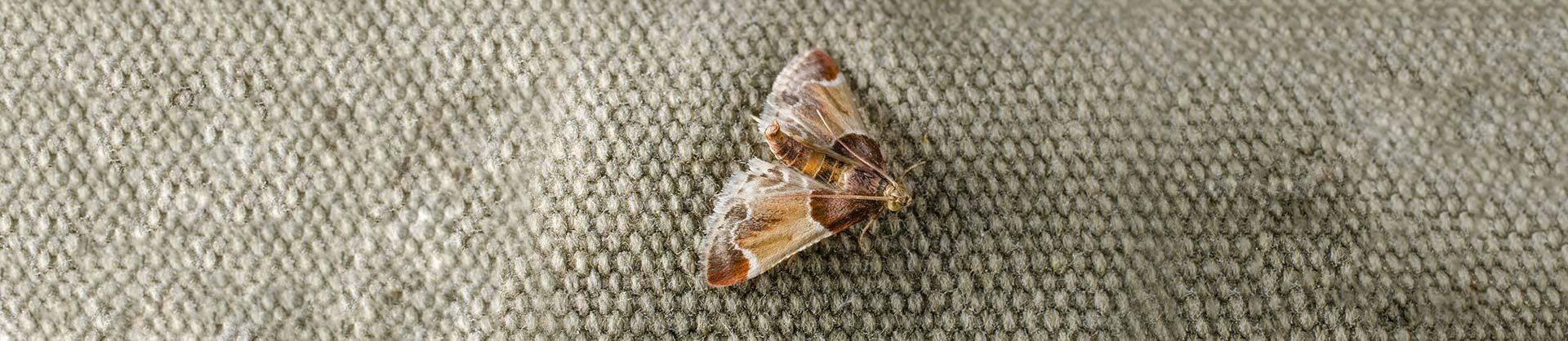 Pantry Moth Pest Control