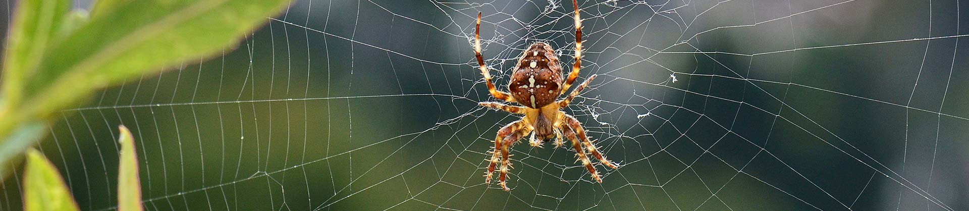Spider Pest Control Services Newcastle