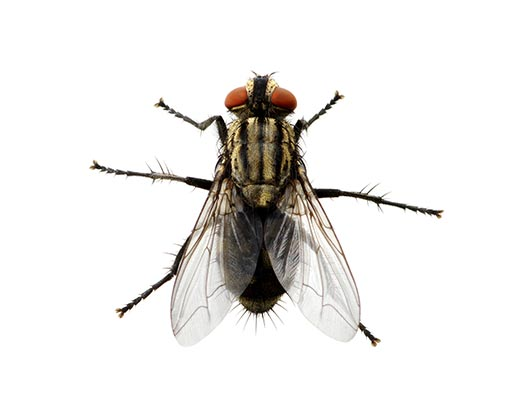 Fly Pest Control Newcastle