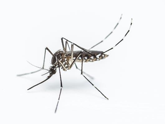 Pest Control Mosquitos